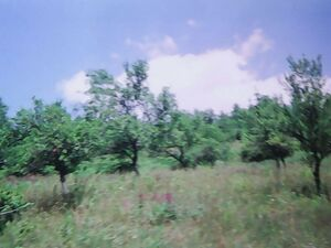 Land For Sale in Montenegro