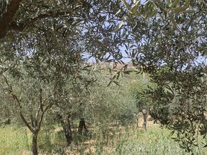 Land in Sicily - Barbaro Cda Felicia