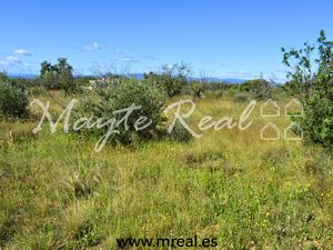 PLOT OF LAND – LIRIA, VALENCIA, SPAIN
