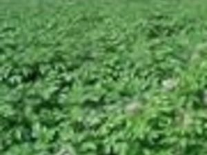 649 Acres Potatoes farm for sale in Njoro Nakuru Kenya