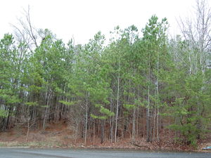 1 Acre Lot For Sale In Cartersville Subdivision