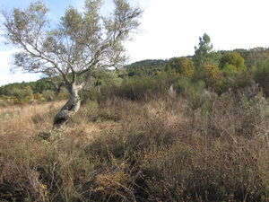Land of 6,500 m2 - Penamacor €8,500 Ref:18/332