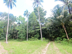 Land for rent in Woktum Koh Phangan