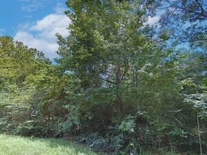 0.54 acres of raw land in Conroe, Texas - TX 77302