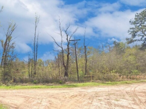 0.42 acres of raw land in Conroe, Texas