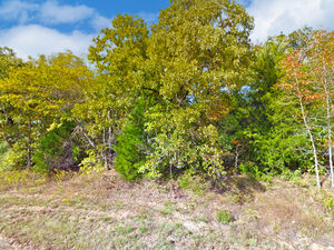 Be one with Nature on this Vacant Lot - Murchison TX 75778