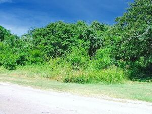 Little Lot With Lots Of Potential in White Bluff